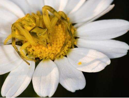 Máster en Biología Evolutiva Integrativa de la Universitat de València