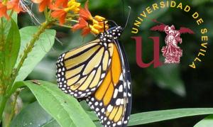Máster Universitario en Biología Avanzada, Investigación y Aplicación