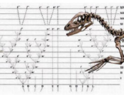Máster en Biología Evolutiva de la Universidad Complutense de Madrid